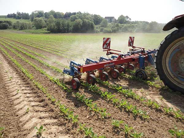 3.-fodder-beet-cultivator