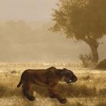 saber-in-safari