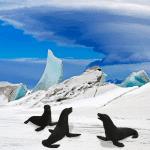 seals-in-antarctica