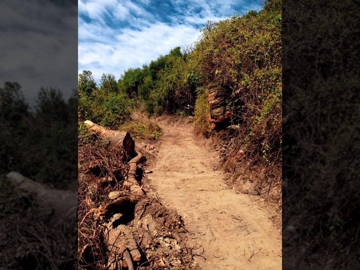 rakaia-gorge-walking-track-9